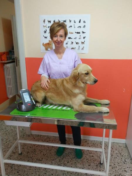 Dott.ssa Carla Tacchini: Medicina interna, Chirurgia, Laserterapia, Fisioterapia